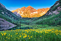 Yellow summer flowers cover the field in front of Maroon Bells outside of Aspen, Colorado during this sunrise photo.