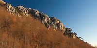 Pollino Massif with Bosnian Pine (Pinus heldreichii; Pinus leucodermis), Basilicata/Calabria, Pollino National Park, Italy. November 2008. Mission: Pollino National Park