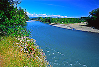 The glacier feed Hoh River as viewed from Oil City.   Olympic National Park, Washington.