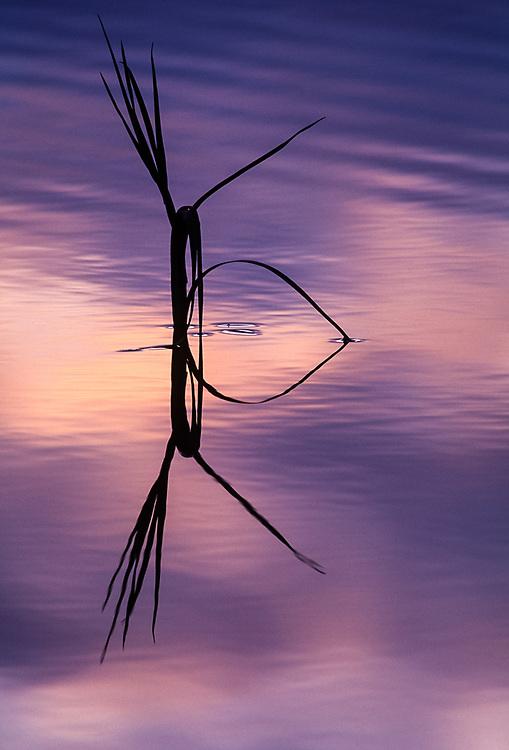 Evening reflection, Matcharak Lake, Noatak River area, Gates of the Arctic National Park, AK, USA
