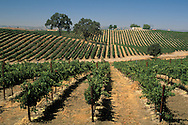 Vineyards, Paso Robles, San Luis Obispo County, California