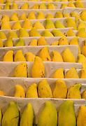 Fresh mango fruits on display in supermarket, Chongqing, China