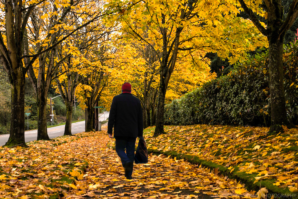 NOVEMBER 1st:  Follow the Yellow Leaf Road