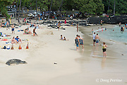 beachgoers enjoy themselves, while 7 year old male Hawaiian monk seal, recently molted, rests on beach inside of SPZ ( seal protection zone ), largely ignored by the public, at La'aloa or Magic Sands Beach Park, Kailua Kona, Hawaii ( Big Island ) ( Central Pacific Ocean )