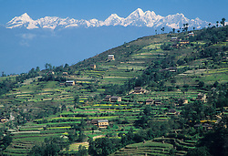 Asia, Nepal, Kathmandu Valley, terraced fields of rice and grains below snow-capped Himalaya Mountains