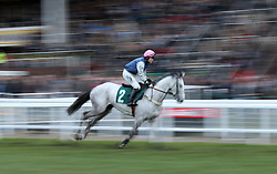 Actinpieces ridden by Miss Gina Andrews go to post prior to the start of the Fulke Walwyn Kim Muir Challenge Cup Amateur RidersÕ Handicap Chase during St Patrick's Thursday of the 2018 Cheltenham Festival at Cheltenham Racecourse. PRESS ASSOCIATION Photo. Picture date: Thursday March 15, 2018. See PA story RACING Cheltenham. Photo credit should read: Steven Paston/PA Wire. RESTRICTIONS: Editorial Use only, commercial use is subject to prior permission from The Jockey Club/Cheltenham Racecourse.