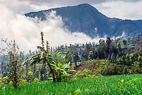 Java, East Java, Bromo Tengger. Fog in the valley beneath Bromo.