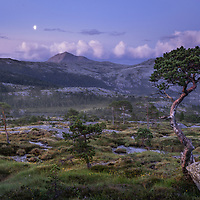 Bodø, Norway. July 2021.