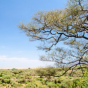 A partly elevated view of Lake Manyara National Park, with a tree in the foreground at right of frame and the low, flat bush of the park in the background.