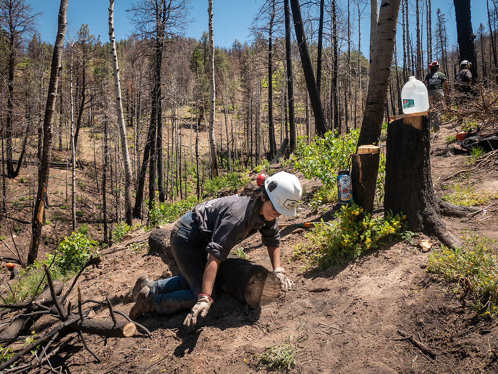Members of the Mile High Youth Corps work to stabilize a hillside scorched by the 2016 the Junkins Park fire.