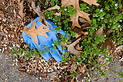 Brooklyn, NY. 5 April 2020. Discarded surgical gloves proliferate in the streets and on sidewalks, and add to the litter as well as potential points of contagion.