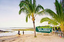 Sea Turtle Research station, set up by researcher George Balazs, PhD, NOAA National Marine Fisheries Service (NMFS), Hawaii Preparatory Academy (HPA) students and teachers (NOAA/HPA Marine Turtle Program), and ReefTeach volunteers at Kaloko-Honokohau National Historical Park, Kona Coast, Big Island, Hawaii, USA, Pacific Ocean