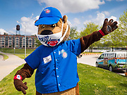 """06 MAY 2020 - DES MOINES, IOWA: """"CUBBIE,"""" the mascot for the Iowa Cubs, wears a face mask while he waves to passing motorists during a hand sanitizer give away at Principal Park, the stadium for the Iowa Cubs, the minor league baseball team affiliated with the Chicago Cubs. Two months after the start of the COVID-19 pandemic Iowa retailers still can't keep everyday items like hand sanitizer, toilet paper, and alcohol based cleaning supplies in stock. Many of the artisan distilleries in Iowa have started making and distributing free hand sanitizer.      PHOTO BY JACK KURTZ"""