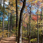 Town Forest, Concord, Massachusetts
