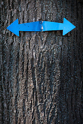 Tree trunk metal sign arrow direction blue