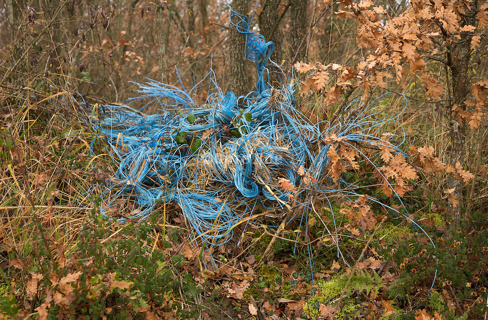 bundle of blue plastic rope in forest
