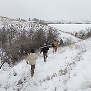 Denver Holt and the Owl Research Institute field crew make their way into the field for long eared owl trapping near Missoula, Montana.