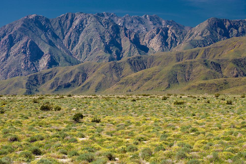 Springtime in the Anza-Borrego Desert and the Santa Inez Mountains, California