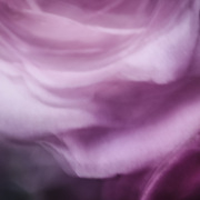 Lens painting of a lavender rose.