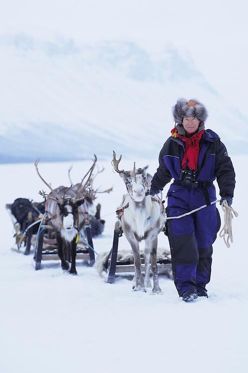 Reindeer; Rangifer tarandus; Laponia WHR; Lapland; Sweden