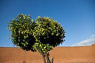 Marrakech Gueliz MRK142