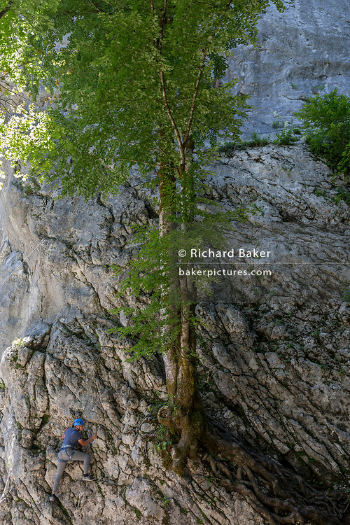 A young Slovenian climber tackles a rock face and tree at Ribcev Laz, on 19th June, in Lake Bohinj, Sovenia