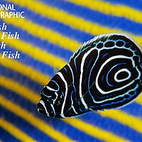 Nat Geo: Coral Reef Color