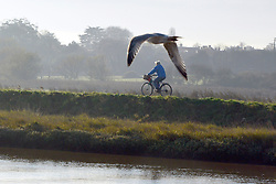 © Licensed to London News Pictures. 01/12/2013. Southwold, UK. A man cycles along a path as a gull flies in the foreground. The first of December was greeted by a brisk sunny morning at the harbour on the River Blyth in Southwold, Suffolk today, 1st December 2013. Photo credit : Stephen Simpson/LNP