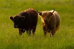 - Ryan Hiscott/JMP - 22/06/19 - STOCK - JMP Scotland Holiday - Scotland - JMP Scotland Holiday