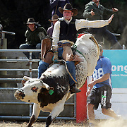 Stuart de Ridder from Geraldine in action during the Open Bull Ride competition at the Southland Rodeo, Invercargill,  New Zealand. 29th January 2012