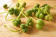 Fresh Nasturtium seeds