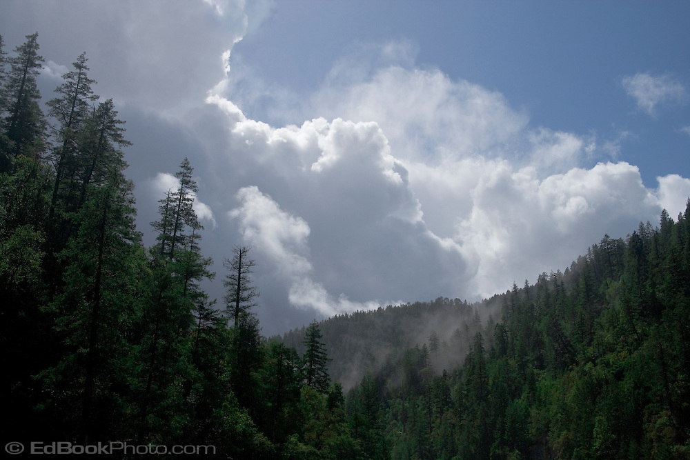 clouds and mist rising from the forest in the northern California Siskyou mountains