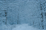 Snow Covered Driveway,  in Catskill Park, Mt Tremper, New York