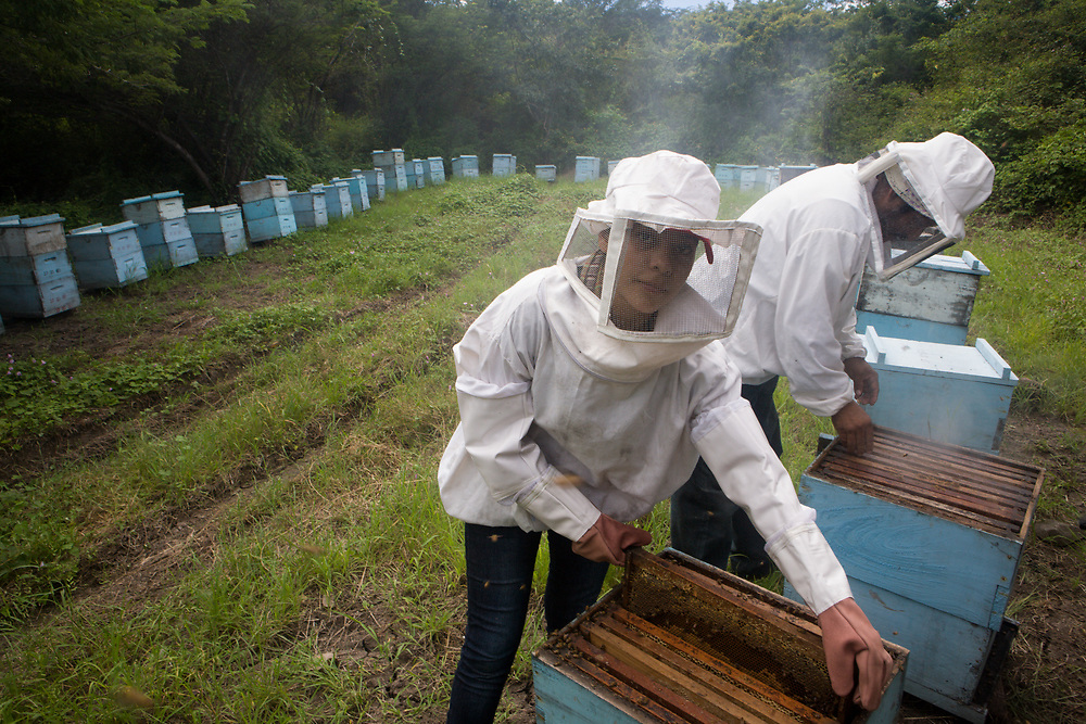Here bee-keepers Donald Hernández Vallestero and Olinda Duarte inspect hives. Donald and Olinda produce fairtrade-certified honey.