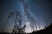 "Nightscape with standing dead trees and forest further away in clear night with Milky Way in back, nature reserve ""Augstroze"", Latvia Ⓒ Davis Ulands 