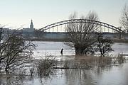 Nederland, Nijmegen, 8-2-2020 In Nijmegen en de aangrenzende Ooijpolder staat het water van de Waal op het maximum van deze golf van de Rijn uit Duitsland . Veel dagjesmensen en natuurliefhebbers komen op het verhoogde water af. De waalkade is vorig jaar voor een deel met 1 meter verlaagd, en loopt daarom sneller onder als voorheen, wat veel belangstellenden trekt . Toch staat het water nog een halve meter onder het grootste deel van de kade. Hij is afgesloten voor verkeer. Foto: Flip Franssen