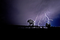 Streaks of Lightning spread across the sky, backlighting cottonwood trees that grow along the banks of the Yellowstone River in Montana's Paradise Valley.