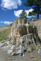 Petrified Sequoia stump, Sequoia affins, the largest stump at Florissant Fossil Beds National Monument.  The stump is 12 ft. tall and 38 ft. around. Colorado.