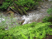 Bright Green Ferns and Creek