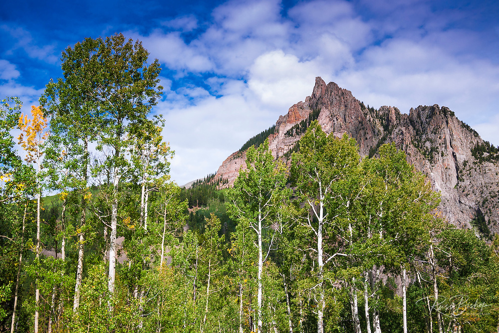 Aspen grove under the Ophir Needles, Uncompahgre National Forest, Colorado USA