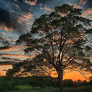 Sunset and the silouette of a grand old maple tree at the Appleton Farms & Grass Rides, Hamilton, MA