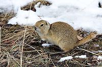 At Inglewood Bird Sanctuary..©2008, Sean Phillips.http://www.Sean-Phillips.com