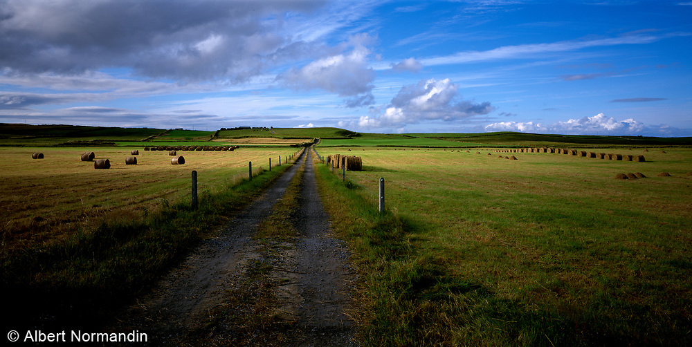 Road and farm fields, big sky country