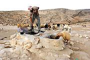 Israel, Negev Desert, Bedouin Shepherd with herd of sheep waters his herd from the water well