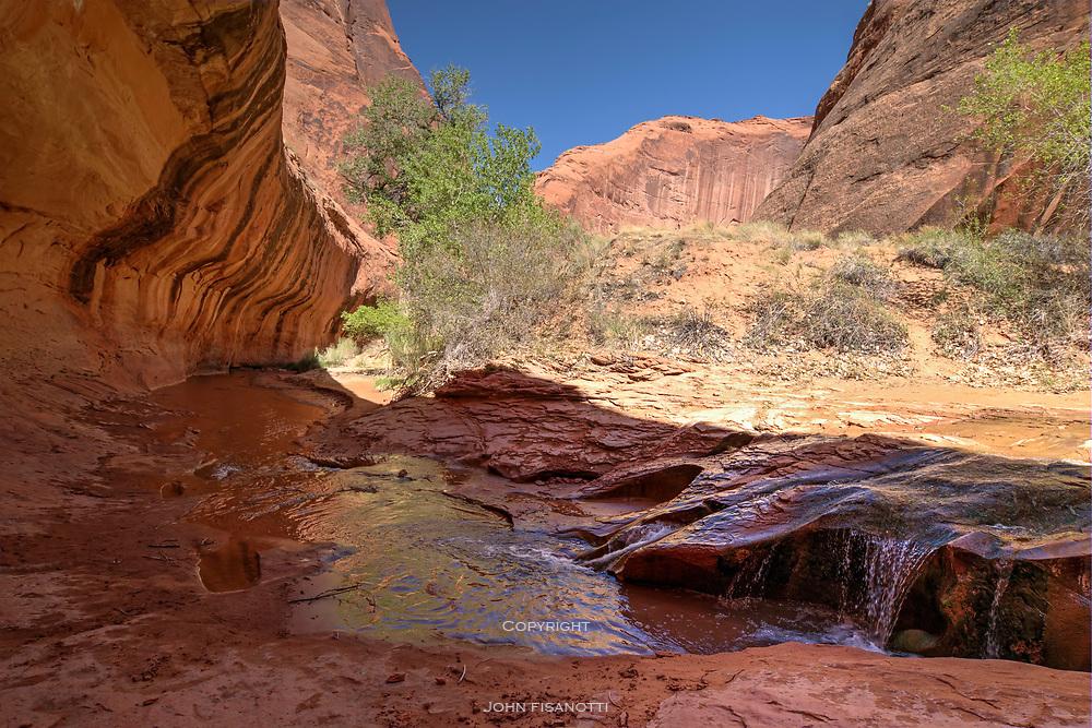 A Desert Stream in Coyote Gulch.