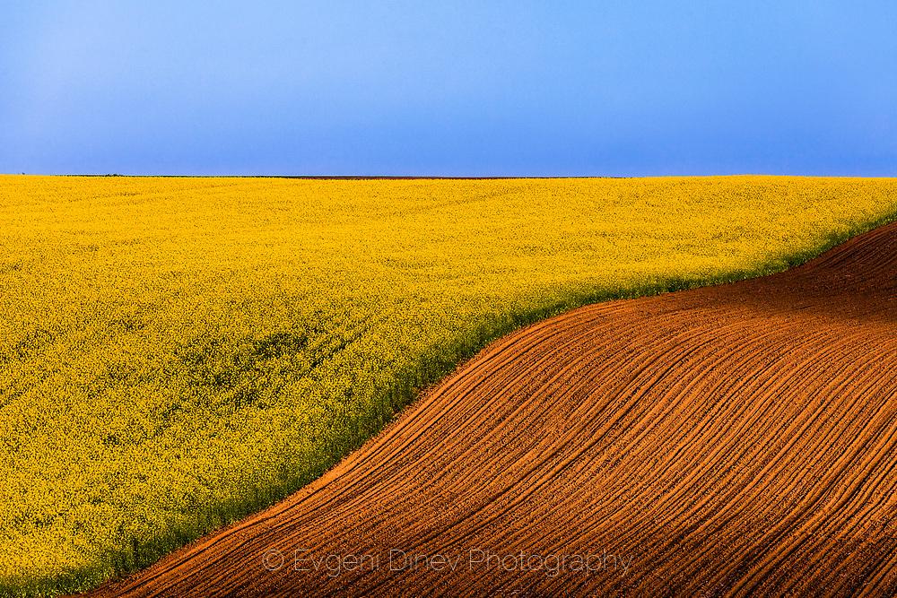 Field in Dobrudzha region