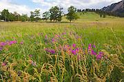 Lush meadows in Chautauqua Park, Boulder, Colorado.