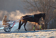 Town of Wallkill, New York - Steam rises off a harness racing horse as the horse and driver head back to the barn after working out on a cold morning at the Mark Ford Training Center on Dec. 12, 2011.