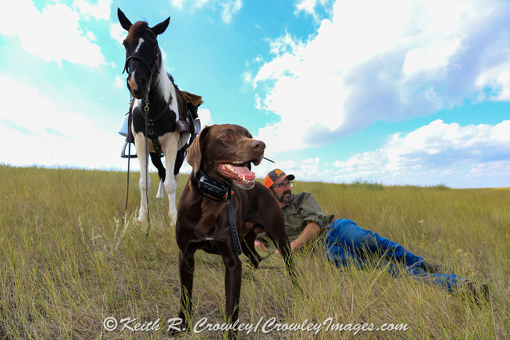John Zeman and his German shorthair Willy take a break on the Montana prairie, resting in the shadow of his horse Buckwheat during a grouse hunt.