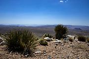 Joshua Tree National Park Scenic View